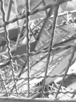 Iron Web