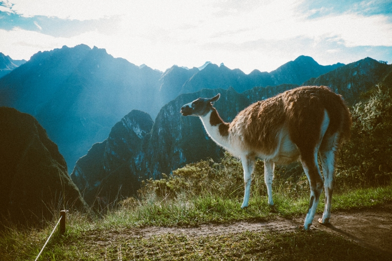 MelissaMonotyaPhotography_Travel_MachuPicchu_01